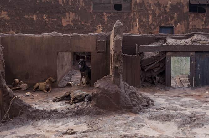 cães em meio a ruínas enlameadas